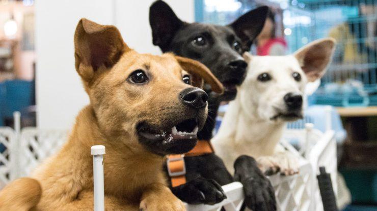 perros adopcion2