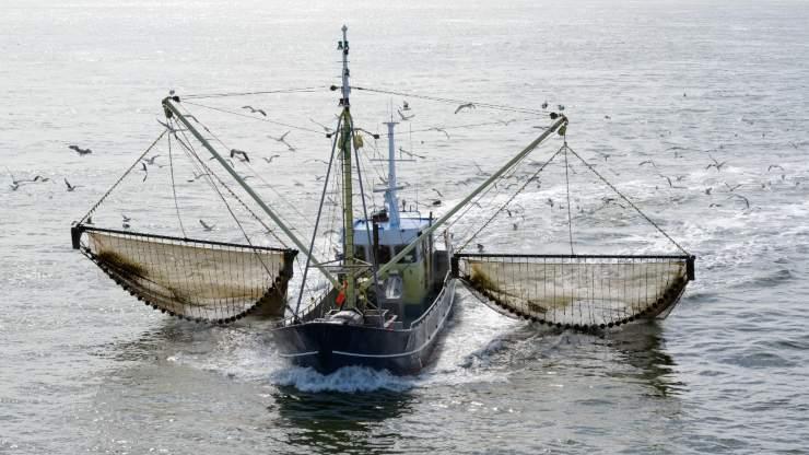 Expectativa ecológica: Chile decide la derogación de la pesca por arrastre
