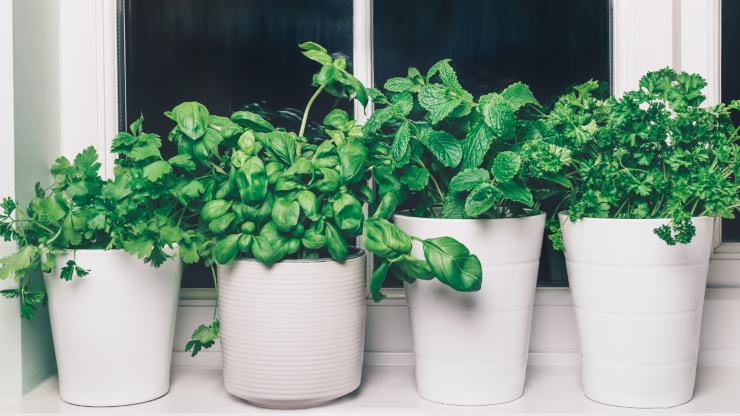 Huertos inteligentes: una manera de tener siempre aromáticas en tu cocina