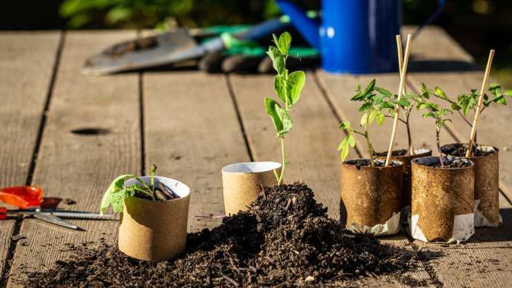 5 usos ecológicos que puedes darle al cartón en huertas y jardines