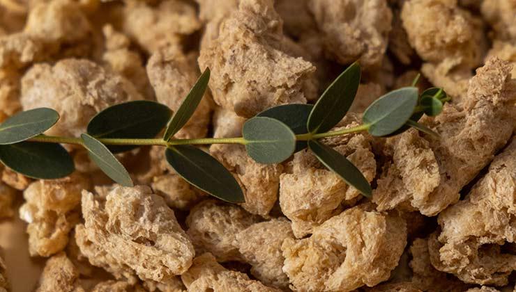La soja texturizado es un subproducto que se elabora luego de la extracción de aceites de los granos de soja (Foto de Ron Lach- Pexels).