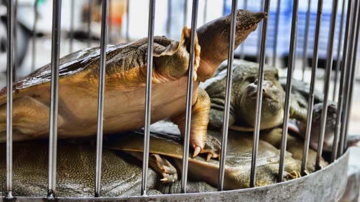 La OMS pidió suspender la venta de animales salvajes en los mercados