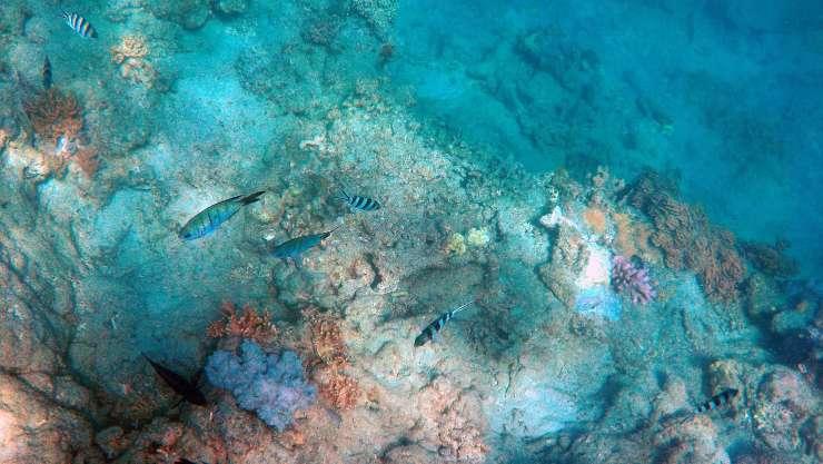 Allen Coral Atlas