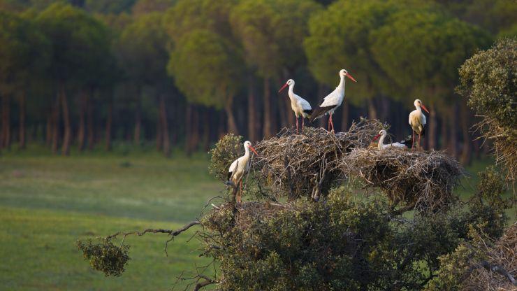 ¿Sabes qué es la Lista Verde de áreas naturales protegidas?