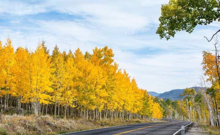 Pando se encuentra en el Fishlake National Forest