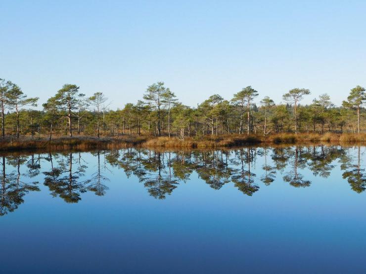 Reserva Natural de Põhja-Kõrvemaa, Estonia
