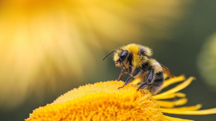 Por qué nuestra supervivencia depende de las abejas