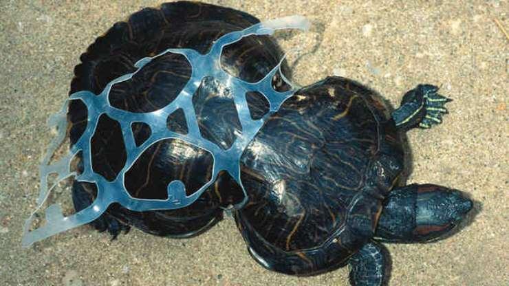 el plastico mata animales marinos