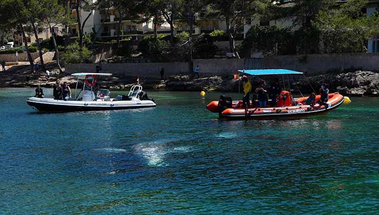 El objetivo del rescate fue impedir que Wally encallara en la costa ((Foto Secretaría de Medioambiente y Territorio del Gobierno de las Islas Baleares - Twitter).
