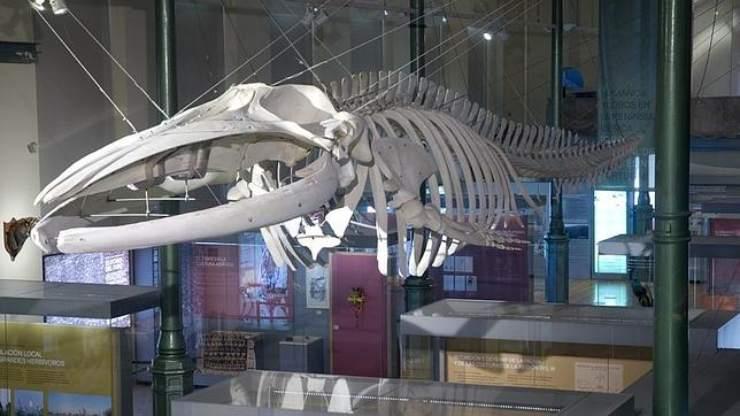 museos de historia natural del mundo