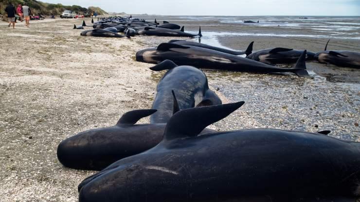 ¿Sabías que nuestro ruido afecta la vida de los animales marinos?