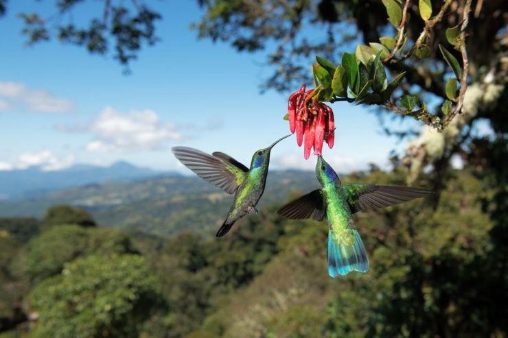 Día de la biodiversidad: por qué su pérdida será nuestra ruina