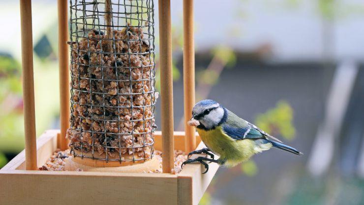 Construye comederos para aves silvestres con solo 3 elementos