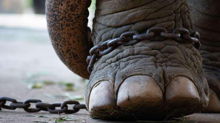 Animales en cautiverio: imágenes que valen más que las palabras