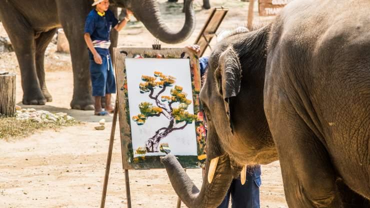 Elefantes que pintan: la triste realidad detrás del espectáculo