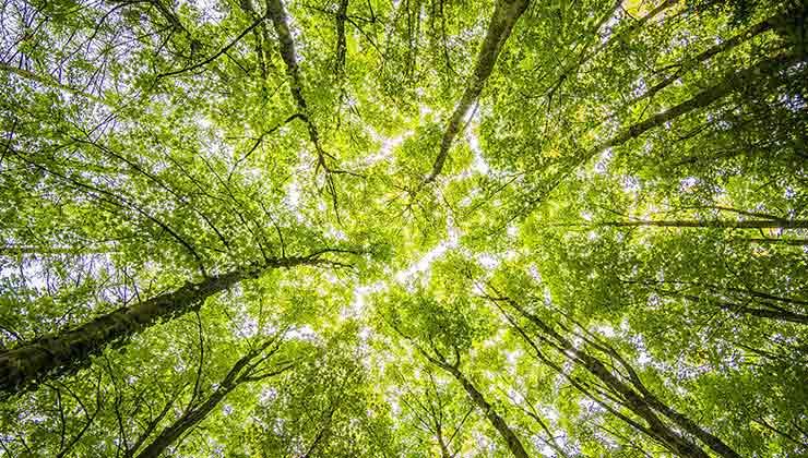 Las empresas de triple impacto están pensadas para cuidar el ambiente desde su concepción (Foto de Felix Mittermeier - Pexels).