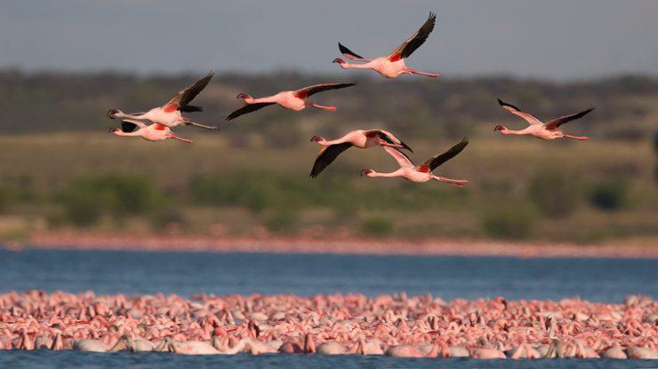 Las aves migratorias nos conectan mas allá de las fronteras