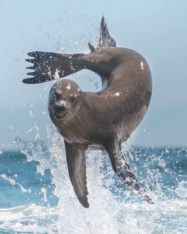 mundo animal: León marino