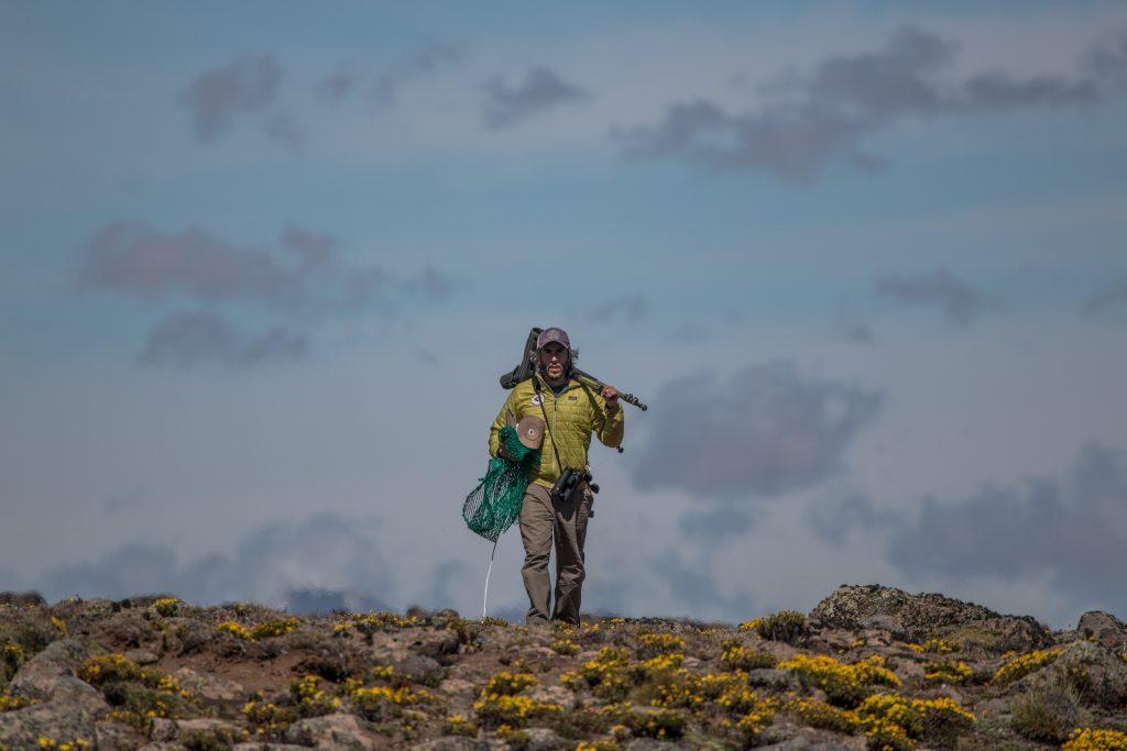 El biólogo Carlos Roesler trabaja salvar a la especie en la Patagonia argentina (Foto Aves Argentinas).