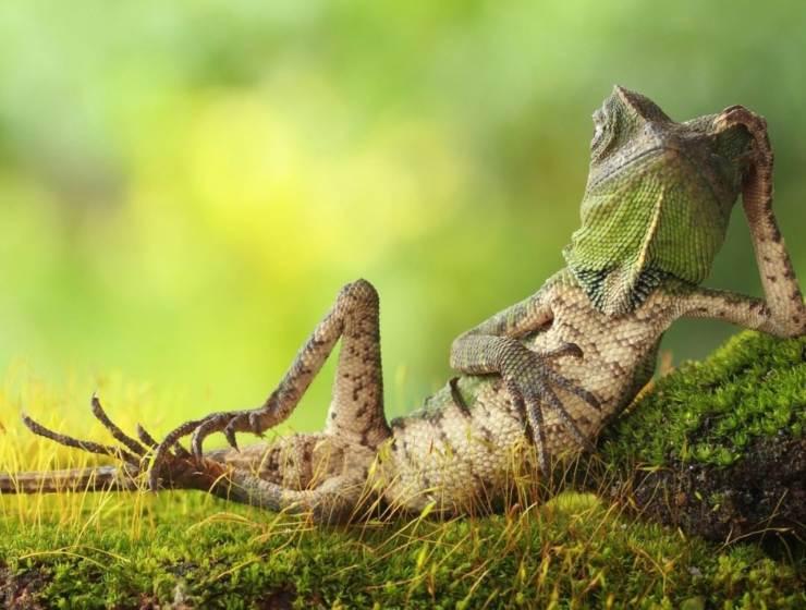 imágenes divertidas del mundo animal, ¿cuál es tu favorita?