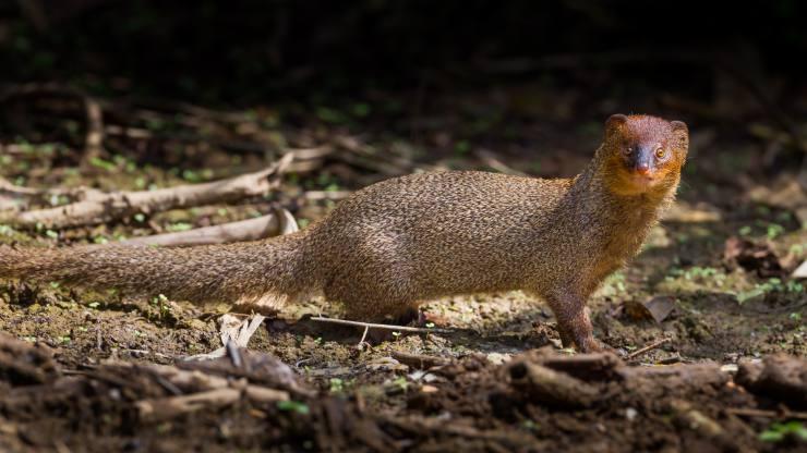 Las especies invasoras son la segunda causa de pérdida de biodiversidad