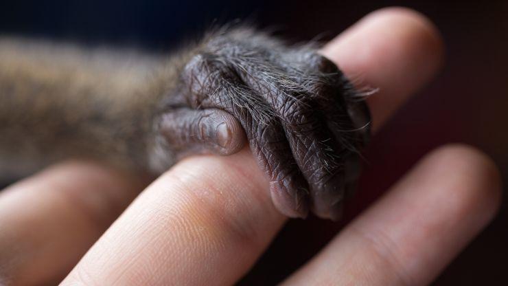 Seres sintientes: los animales ya no serán considerados cosas en España