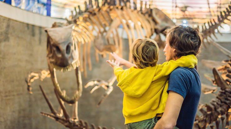 ¿Quieres aprender sobre historia natural? No te pierdas estos museos