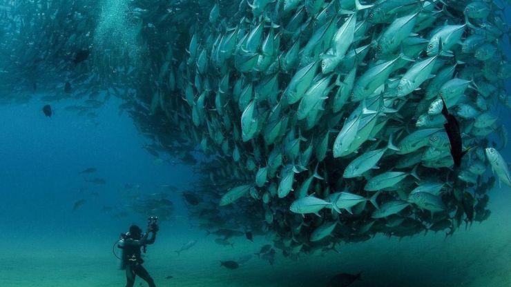 Para maratonear el finde: 5 documentales a favor de la vida marina