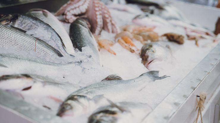 Descubren contaminación con fármacos en pescados de consumo local