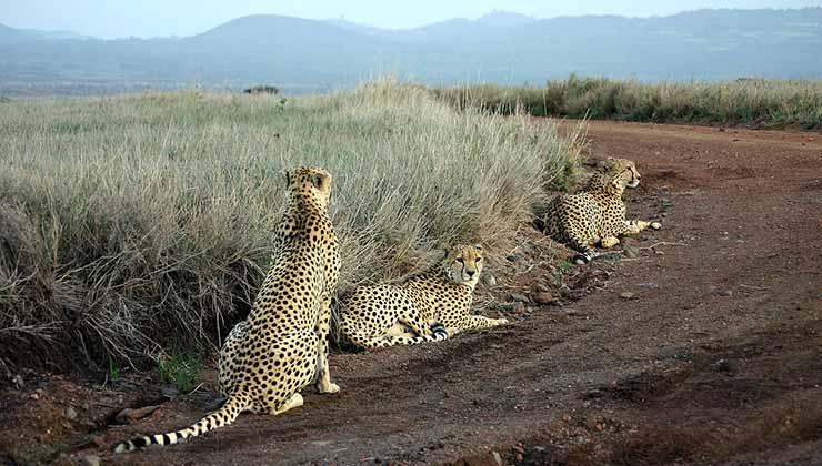 Lewa es un santuario de vida salvaje en Kenia que integra la lista verde de la IUCN (Foto de Kevin Walsh - Wikipedia).