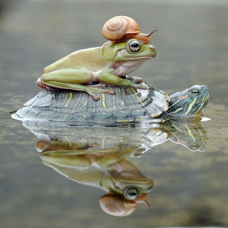 mundo animal: trío de amigos de paseo