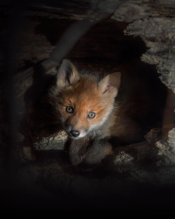 Fotos de animales salvajes de Suecia
