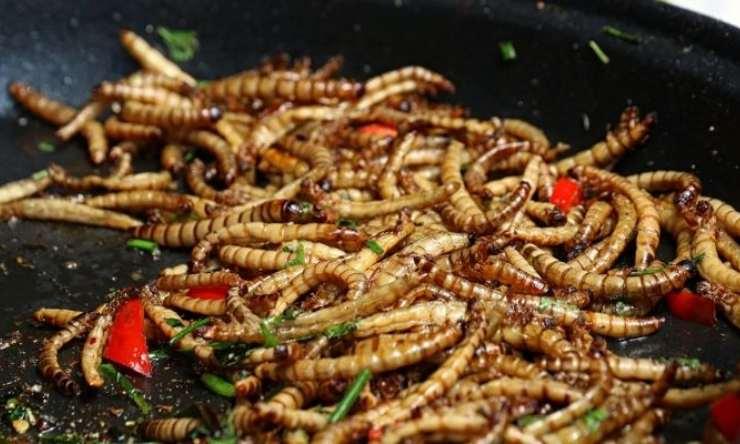 gusano de las harinas