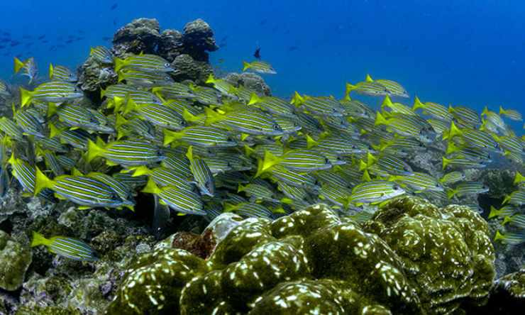 fondos marinos de Costa Rica
