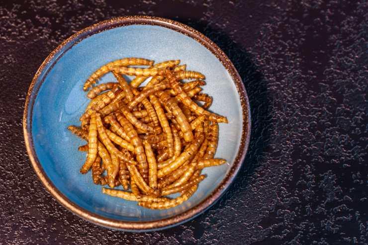 Seguridad alimentaria: Europa se abre a un mundo de insectos comestibles