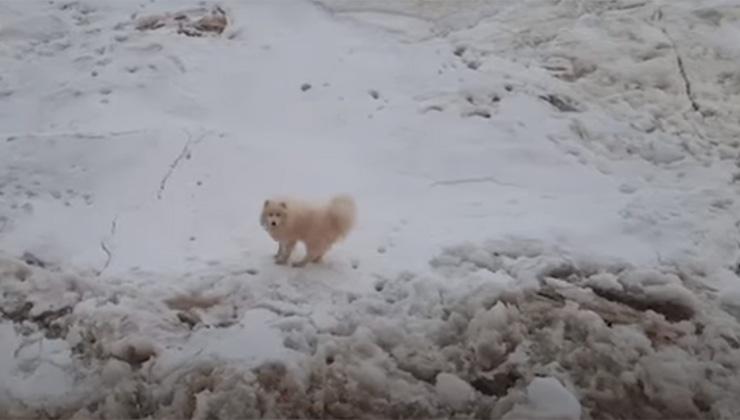 El rompehielos ruso rescató a este perro atrapado en el Ártico (Foto: captura de video).