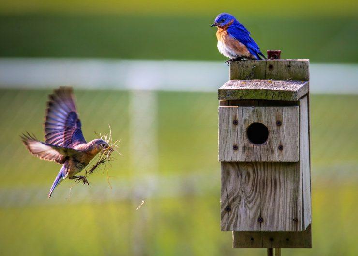 Cajas nido: ¿qué función cumplen y cómo puedes hacerlas en casa?