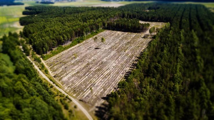 Cada 3 segundos se pierde un área de bosques igual a un campo de fútbol