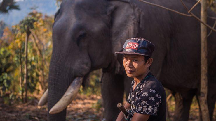 El incierto destino de los elefantes de carga en Myanmar