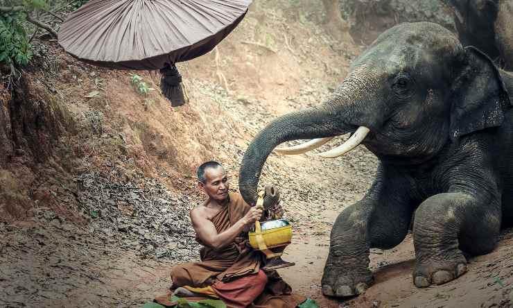 elefantes de Myanmar