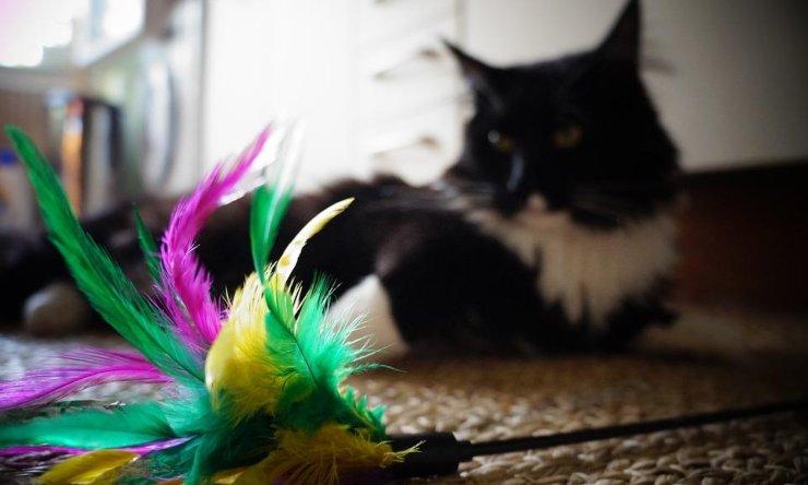 consejos antes de adoptar un gato