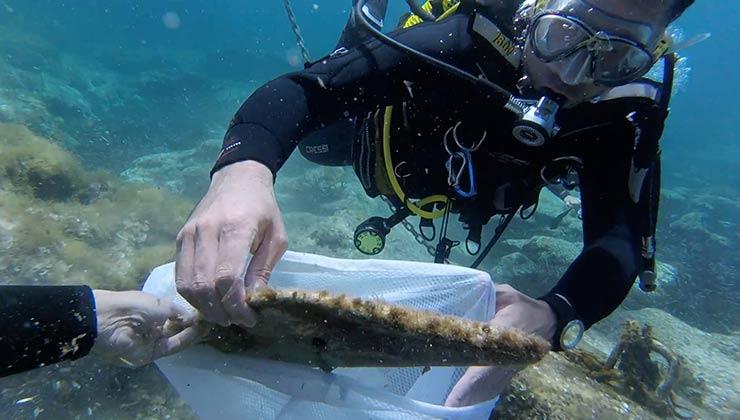 Se estima que el 70 por ciento de la basura plástica en los océanos termina en el lecho marino (Foto: 0 Plastics Menorca).