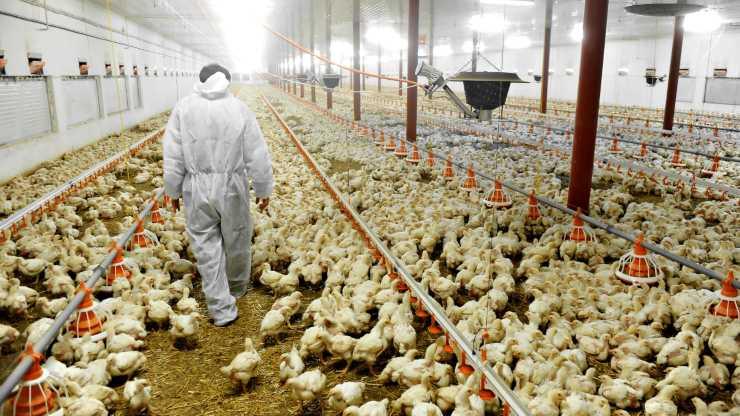 La cría intensiva de animales sería la responsable de la pandemia