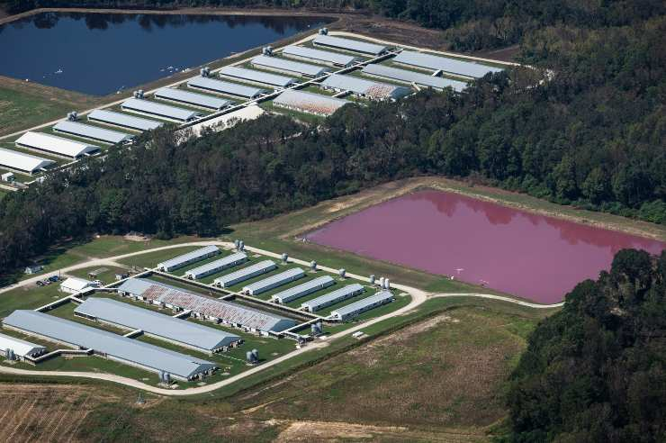 granja industrial de animales