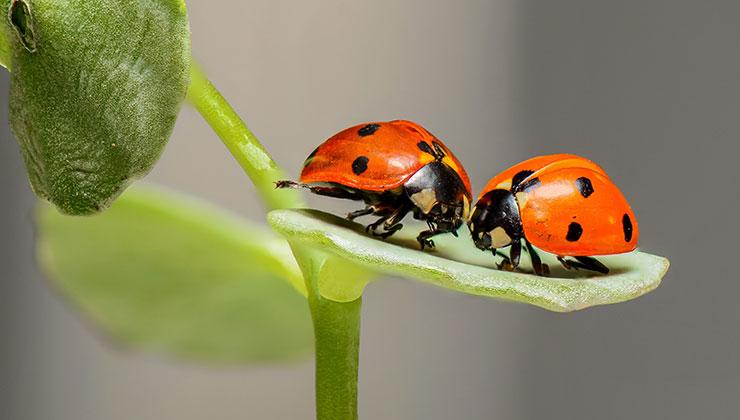 El pequeño universo de los insectos tiene millones de detalles para descubrir (Foto: Pixabay - Pexels).