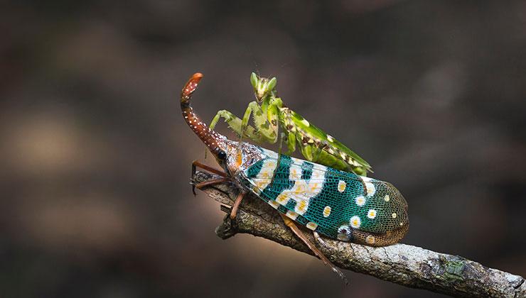 Otra cosa que atrae mucho de los insectos es su particular comportamiento (Foto: Quang Nguyen Vinh - Pexels).