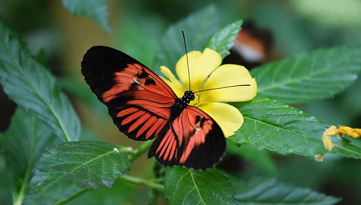 Las aplicaciones para identificar insectos son muy útiles para aprender (Foto: Vadim Lu - Pexels).